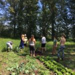 Thanks to HIP Peace Produce and the Peace River Regional District, we partnered up to offer a fully credited professional development opportunity around invasive species in Bear Flats. Participants even went home with some locally grown produce.